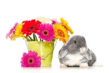 little rabbit with flowers