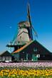 mulino a vento in Olanda