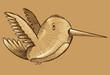 Humming Bird Sketch Doodle