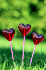 Red lollipops in heart shape, on fresh green grass, in the garde