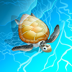 Turtle in the blue sea