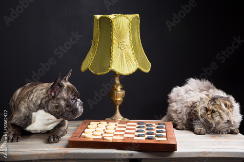 French bulldogplaying checkers with persian cat on black