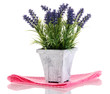 Beautiful lavender in wooden pot isolated on white