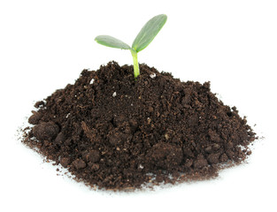 Green seedling growing from soil isolated on white