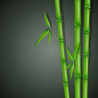 Vector Illustration of Bamboo
