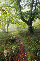trail in forest with fog and rain