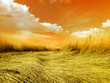 Fototapeten,sonnenuntergang,savanne,feld,gras