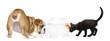 English Bulldog Puppy and black kitten looking at a goldfish