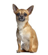 canvas print picture - Chihuahua, 2 years old, sitting and facing, isolated on white