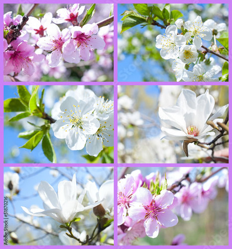 set of images with blooming trees