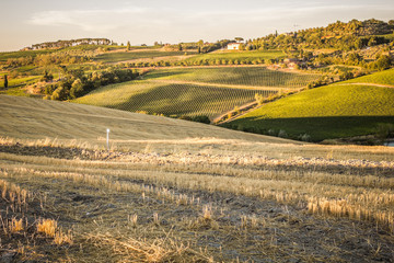 Tuscan countryside at sunset near Montepulciano, Tuscany, Italy