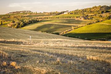 Tuscan countryside at sunset near Montepulciano, Tuscany, Italy