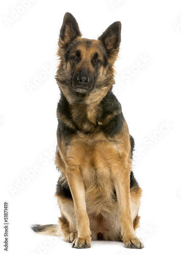 German shepherd sitting, 4 years old, isolated on white