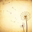 Vintage Dandelion Background