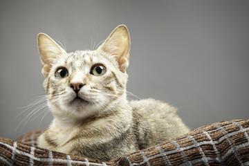 retrato de una gata doméstica