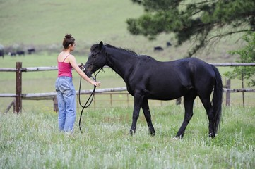 Natural Horsemanship. movement, Motion.