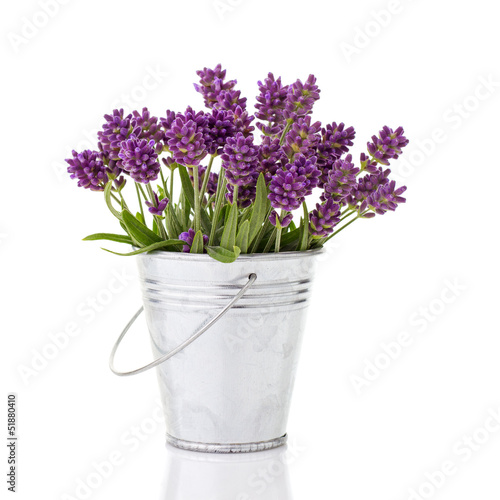 Deurstickers Lavendel lavender in a metal bucket