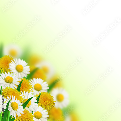 Bouquet of dandelions and daisies