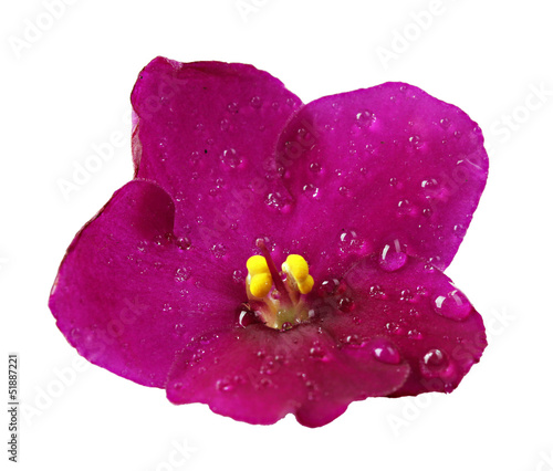 Bright saintpaulia flower, isolated on white