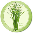 Garlic or Chinese Chives Herb Icon, Asian cuisine, white flowers