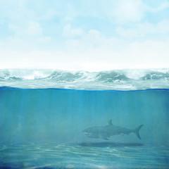 Himmel Wasser Hai Hintergrund 3D