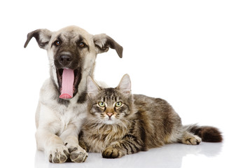 dog yawns near a cat. isolated on white