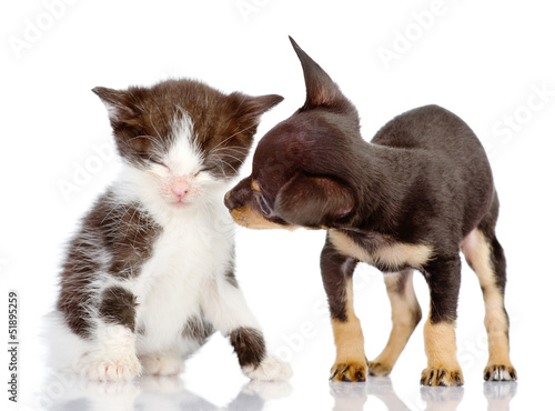 puppy looks at a kitten. Isolated on a white