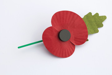 Poppy Appeal for Remembrance Day - Isolated on White Background.