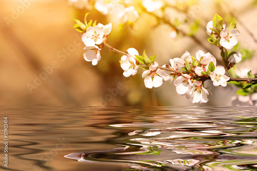 Plexiglas Kersen cherry tree branch over the water
