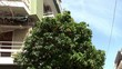 Orange tree with a fruit on the street of Athens