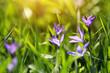 enchanting blue flowers