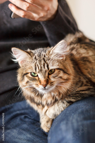 man sitting on armchair holding and petting pet cat