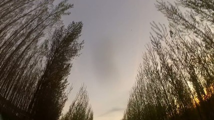 Alamedas GoPro