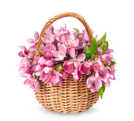 basket with blooming apples
