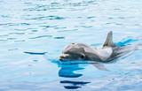 Dolphin in Dolphinarium