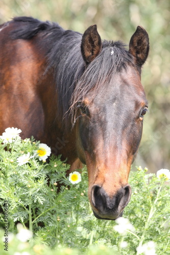 Quarter Horse in Blumen