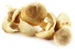Edible Shiitake Mushroom over white background