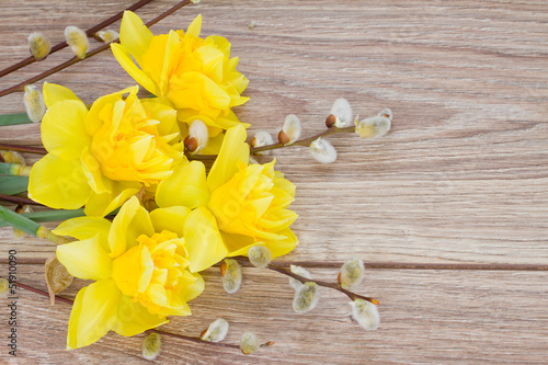 yellow narcissus flowers with catkins