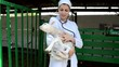 doctor in a white coat examines the lamb on the farm