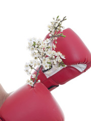 hand in a boxing glove and a blossoming tree