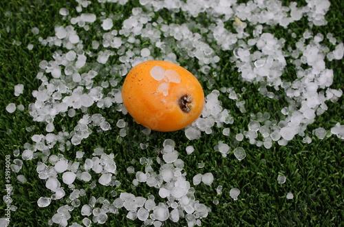 Nispero con granizo - 51914008