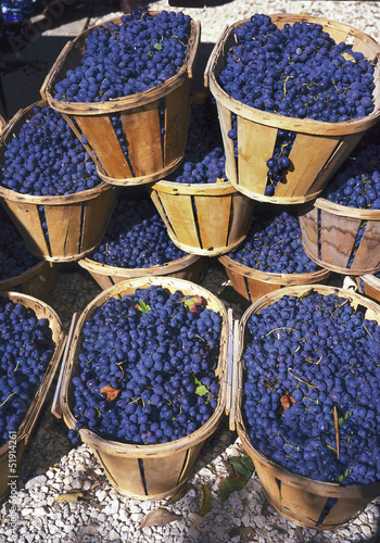 Blue wine grapes in wicker baskets