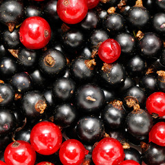 red currant and  blackcurrant background