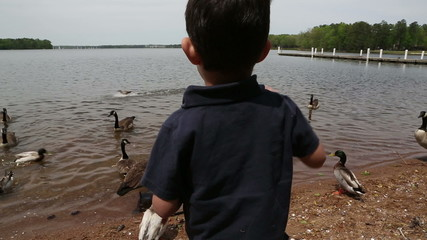child feeding the geese