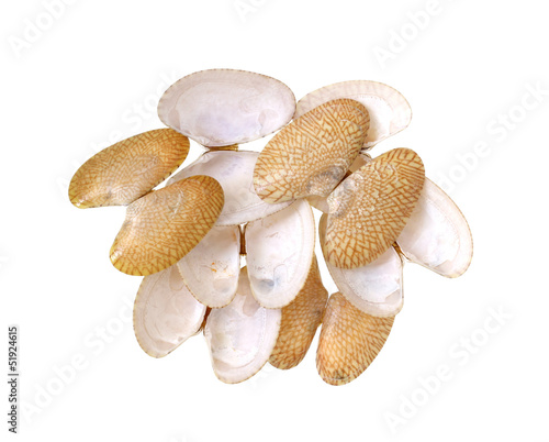 Clams shells isolated on white background