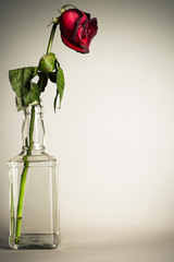 vintage parched roses in a glass bottle