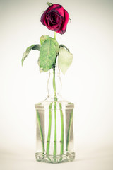 vintage bottle with a wilted rose
