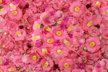 camellia flower background