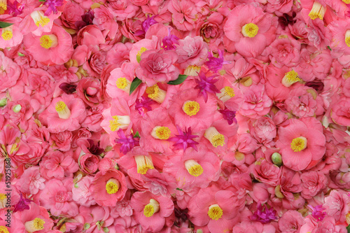 camellia flower background