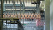 Chicken carcasses on production line